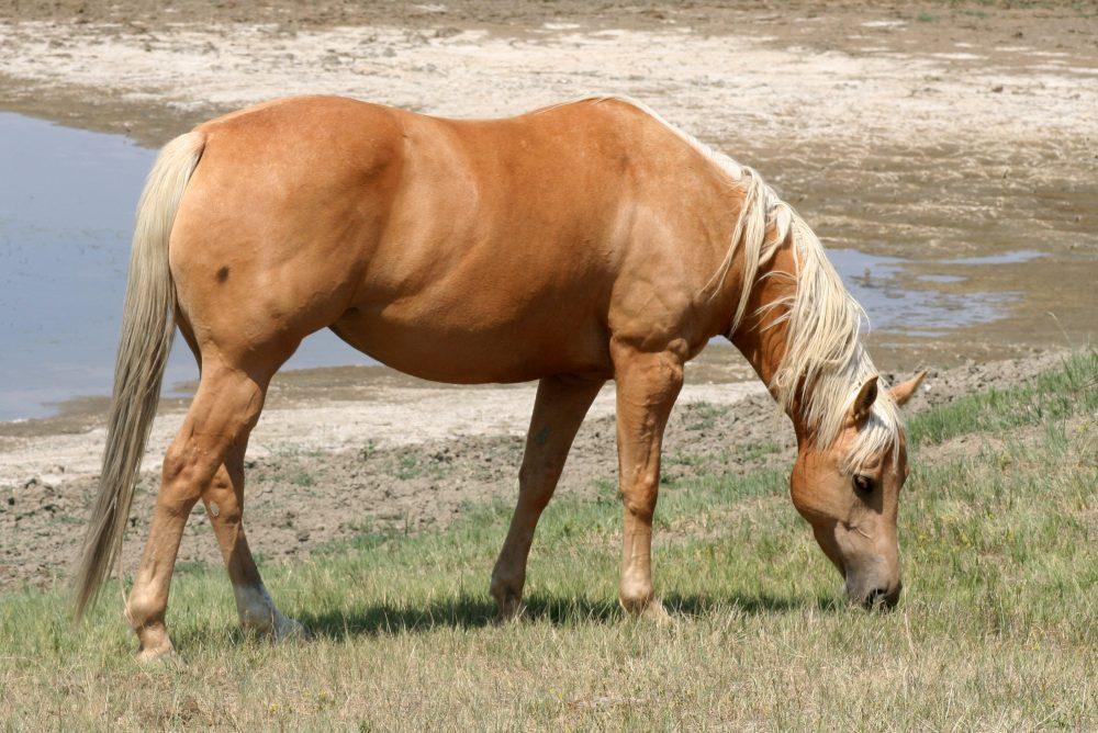 Cm Nonstop Charlsie Crago Performance Horses